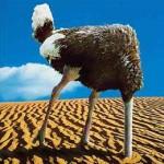 ostrich_head_sand21